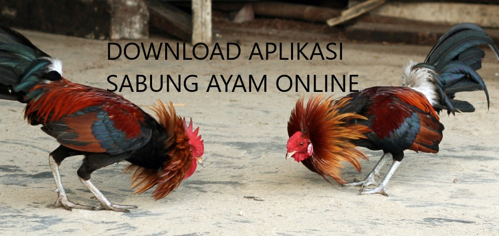 Download aplikasi sabung ayam